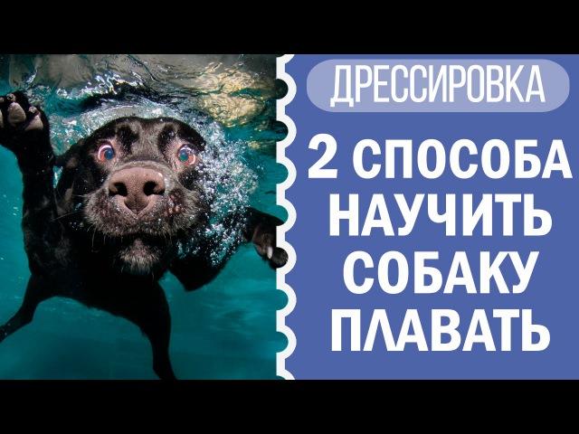 Как научить собаку плавать и приучить к воде | Чихуахуа Софи