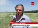 Господарства Київщини завершують збирати зернові