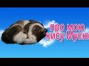 Моя кошка Муся😺😸😻😼🐱🐈