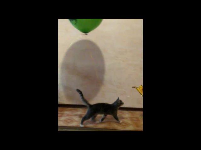 Magic Air Seal Baksika!Волшебный Воздушный Котик Баксикиграемся с гелиевым шаром!