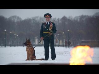 Обращение к президенту России Путину В.В. защитить животных