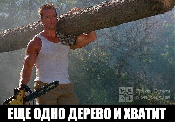 В Таттинском районе осужден виновник незаконной рубки леса 🌳🌳🌳