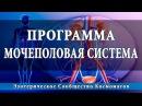 Космоэнергетика Программа оздоровления мочеполовой системы Школа Космомагов