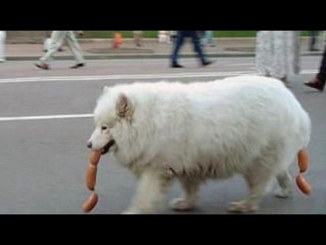 IMPOSSIBLE NOT TO LAUGH - The funniest DOG PUPPY videos!