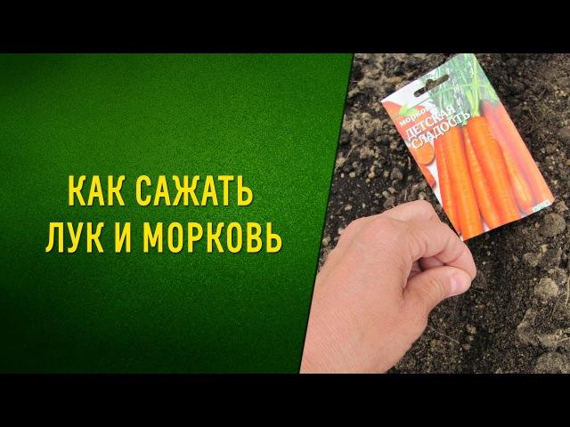 Совместные посадки. Морковьлук= отличный урожай!