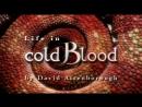 Жизнь с холодной кровью (трейлер)