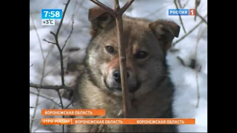 Собака полгода не покидает места, где ее оставил хозяин
