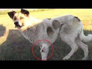Видео - Спасение 3. Собака со сломанной лапой. Часть 1. Смотрите до конца! 18