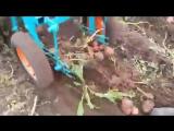 Картофелекопалка для мотоблока ККМ-2A