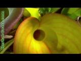 Бромелия - плотоядное растение хищник. дикий мир и поведение растений в нем