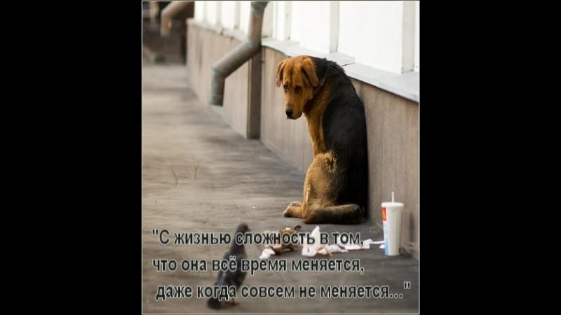 Буктрейлер к книге Собака Пес Даниэль Пеннак