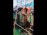 Ижевский зоопарк 3