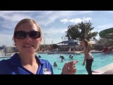 Reporter Jumps in Pool on LIVE TV