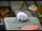 Парень придумал хитрый агрегат для кормления кошки, который заставляет ее пройт...