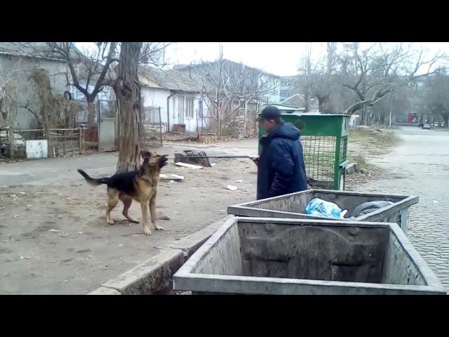 СатирНик (Уманов, Морозенко) - 3. Бездомные собачки