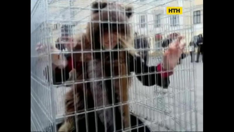 Одеські активісти закликають людей не купувати речі з хутра тварин!