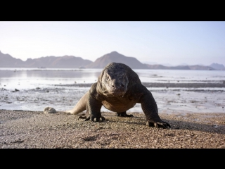 Планета Земля / Planet Earth II׃ Official Extended Trailer - BBC Earth