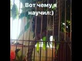 timur_jalabadskii video