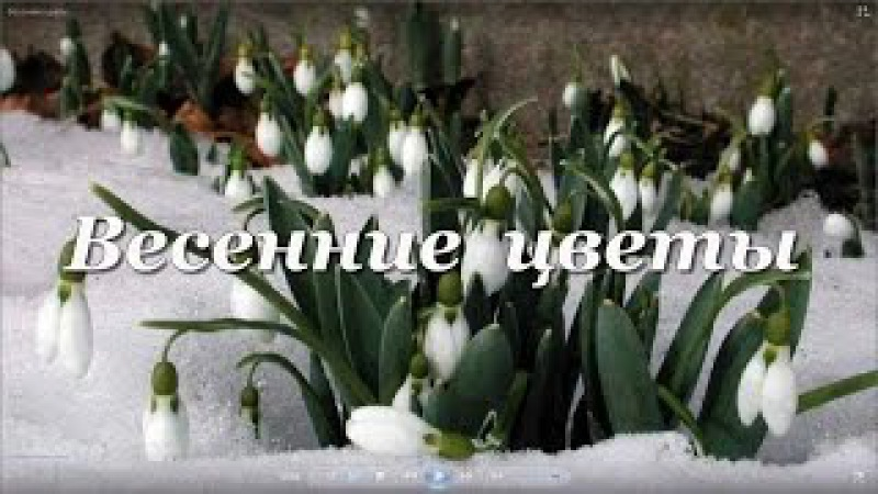 Распускающиеся цветы 5 Весенние цветы.Футажи для видеомонтажа.Скачать бесплатно.