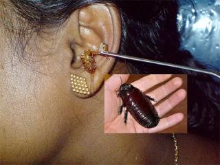 ВИДЕО БЯКА...как узнать есть ли в доме тараканы