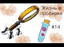 Что же там с Мирмикой Муравьи Myrmica sp 14