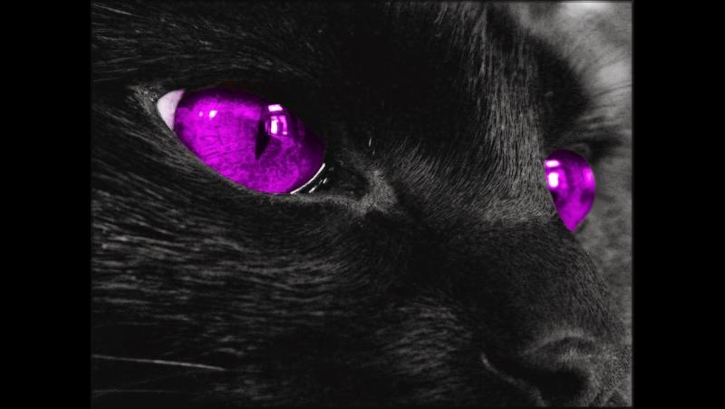 Creepy Cat 666