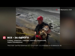 В Оушенсайде 16 пожарных спасли упавшую с обрыва собаку