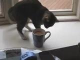 Налил себе кофе, но мой кот мягко говоря не советует его пить