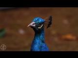 Самое красивое видео. Природа от которой захватывает дух. 4к