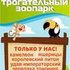 """Трогательный зоопарк """"Лапушки"""""""