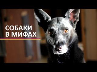 АДСКИЕ ГОНЧИЕ | образ собак в мифологии