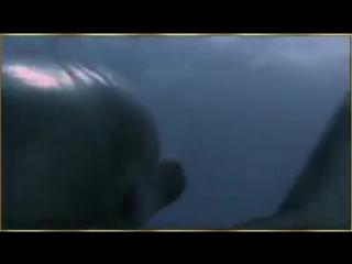 дельфин друг