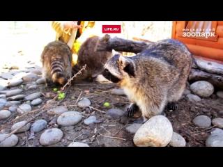 Стражи Галактики в Московском зоопарке