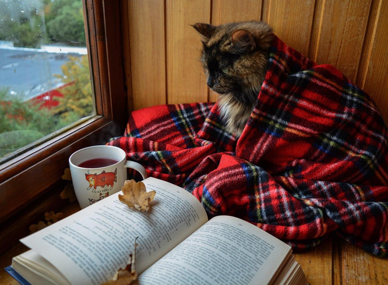 фотоаппарат домашний уют и книга смотреть симпатичных