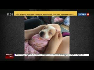 Амурские потрошительницы Алина Орлова и Кристина Конопля Живодерки из Хабаровска будут наказаны