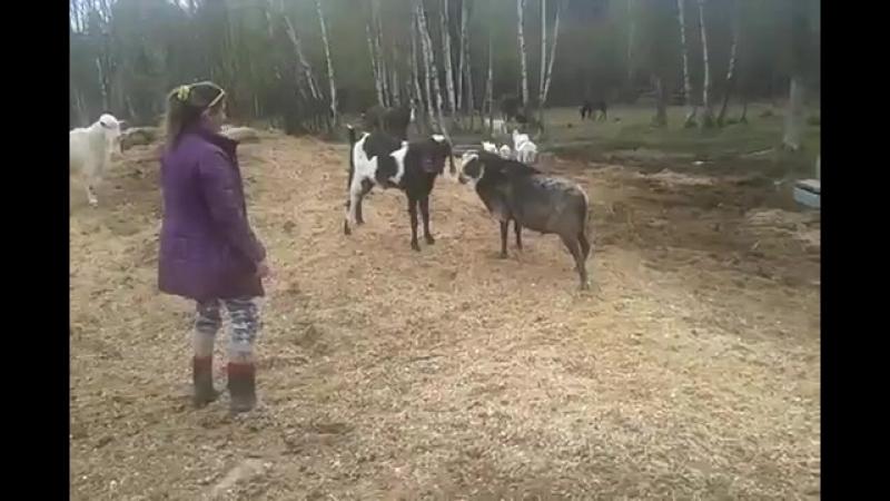 играли с барашком Шоном🐏