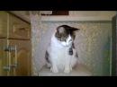 Про кошек: попрошайки Разговор кота Ржака Приколы по кошек Смешно funny cats talking