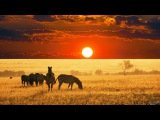 The Beauty of Africa landscapes and wildlife