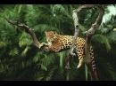 Дикая природа Амазонки Дикое царство Wild Amazon Nat Geo WILD