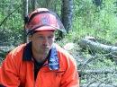 Лес: о нелегкой профессии вальщика леса