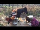 Завтрак с друзьями