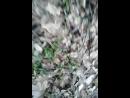 Пошли бля в лес __)))))