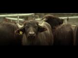 Dub Phizix &amp Strategy - Buffalo Charge