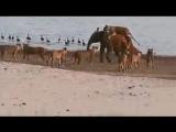 Слоненок, который смог. И один в поле воин!
