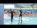 Фантастика! Дельфины и люди!!!