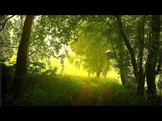 Nature Sounds - Звуки природы Утренняя свежесть и пение птиц в лесу Birdsong in the forest