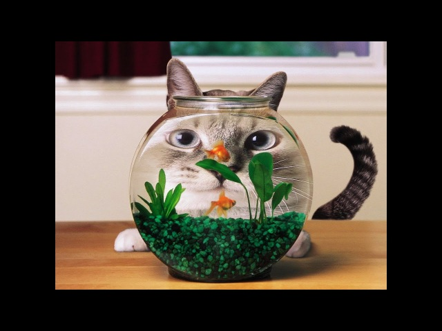 Funny Cats reaction over an aquarium | Best Funny Cat Videos Ever