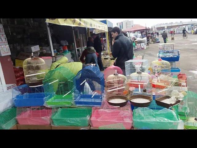 Птичий рынок в минске.цихлиды .астронотусы.скат мотора.дискус