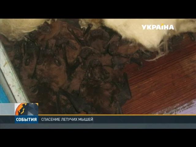 В Запорожье люди случайно разрушили гнездо летучих мышей