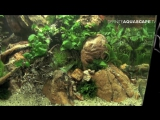 The Art of the Planted Aquarium 2015 - Scaper's Tank (Nano) category, part 9 - YouTube